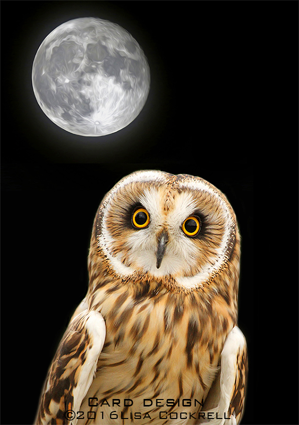 Exclusive Owl Moon Greetings Card