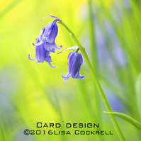 Exclusive Bluebells Greetings Card