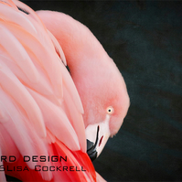 Exclusive Pink Flamingo Greetings Card