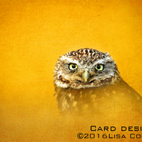 Exclusive Golden Owl Greetings Card