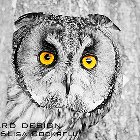Exclusive Owl Stare Greetings Card