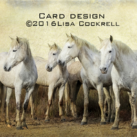 Exclusive Camargue Horses Standing Greetings Card