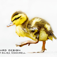 Exclusive Cute Duckling Greetings Card
