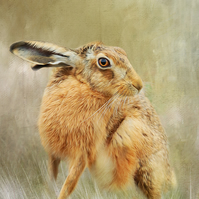 Exclusive Handmade Brown Hare Greetings Card