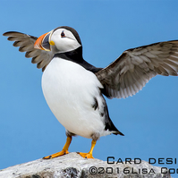 Exclusive Blue Puffin Greetings Card