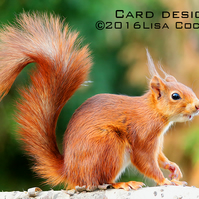 Exclusive Handmade Red Squirrel Greetings Card