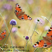 Exclusive Butterfly Meadow Greetings Card