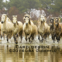 Exclusive Camargue Horses At The Gallop Greetings Card