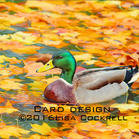Exclusive Handmade Autumn Duck Greetings Card