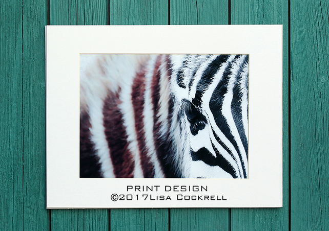 ZEBRA PRINT (A4 approx) MOUNTED FOR 40 X 30 CM FRAME