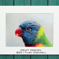 RAINBOW LORIKEET PRINT  (A4 approx) MOUNTED FOR 40 X 30 CM FRAME