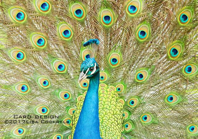 Exclusive Handmade Peacock Greetings Card