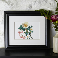 Botanical Print Vintage Sweet Briar and Pink Roses