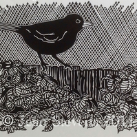 Limited Edition, Hand Pulled, Lino Print - Colly Bird (The Blackbird)