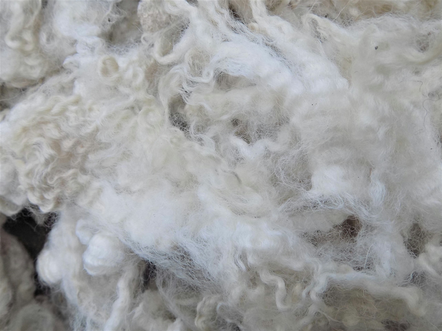 Romney x Shetland – Washed Fleece for Spinning, Felting (300 g)