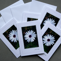 Daisy Notecards (pack of 5) - Handcrafted Notecards - dr15-0001