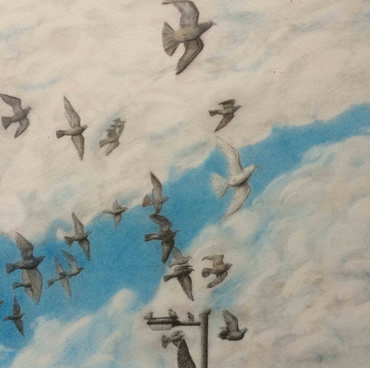Drawing of flock of birds orginal artwork homing pigeons white dove