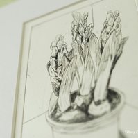 'Hyacinth' - limited edition, original drypoint print.