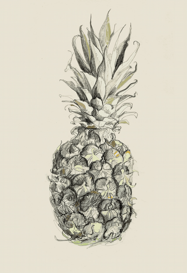 'Pineapple' art PRINT, pineapple illustration, fruit sketch, drawing
