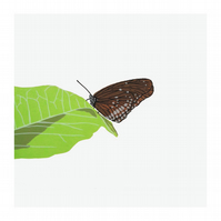 Great Eggfly Butterfly Hand Made Limited Edition Screen Print by Fiona Hamilton
