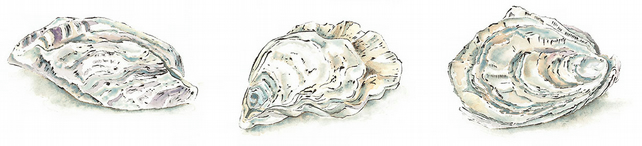 Oysters - Giclee Print of an Original Blotted Line Illustration