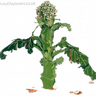 Broccoli - Giclee print of an original blotted line illustration