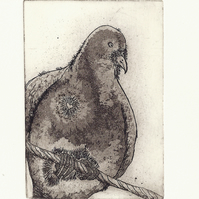 Pigeon Dove by Pandora Johnson - Acrylic Resist Etching with Aquatints