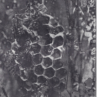 Honey Bee Goodbye by Kevin A. Pickering - Photopolymer gravure