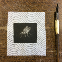 Fly by Anna Johnson - Mezzotint