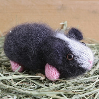 Baby Humbug the Hand Knitted Black and White Guinea Pig