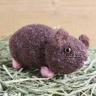 Nutmeg the Hand Knitted Short Haired Brown Guinea Pig