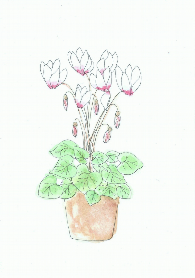 White Cyclamen postcard