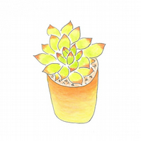 Green and Orange Succulent mini notepad