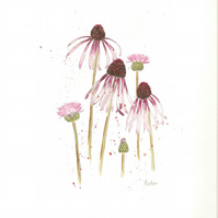 Echinacea Pallida watercolour 8 x 10""