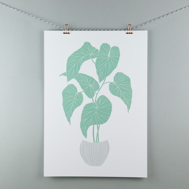 A3 begonia house plant illustration