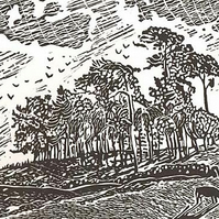 Lino-print, cows, Wensleydale, Yorkshire, trees, Ladyhill by Denise Burden