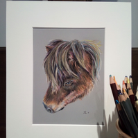 A5 Original Pastel Portrait of Shetland Pony