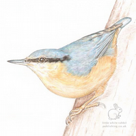 Nuthatch Blank Card