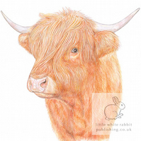 Highland Cow - Blank Card