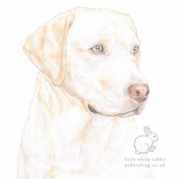 Ollie the Yellow Labrador -  Blank Card