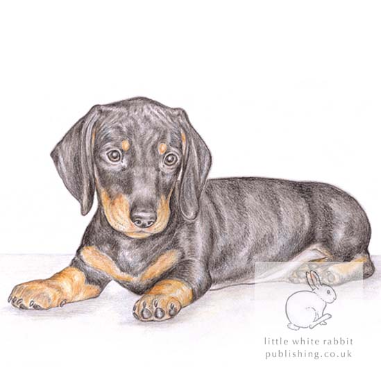 Henry the Dachshund - Blank Card
