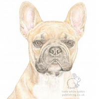 Vinnie the French Bull Dog - Blank Card