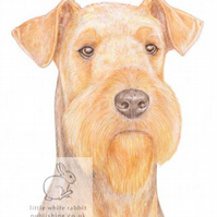 Angus the Airedale Terrier - Blank Card