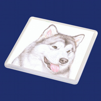 Hugo the Alaskan Malamute - Coaster