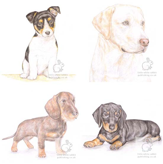 Dog Collection - Pack of 4 Acrylic Coasters