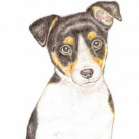 Jack the Jack Russell - Birthday Card