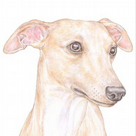 Oscar the Whippet - Birthday Card