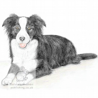 Ivy the Border Collie -  Blank Card