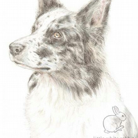 Nixi the Border Collie -  Blank Card