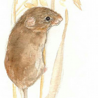 Harvest Mouse - Birthday Card